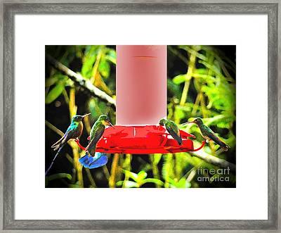 Mindo Hummer Gathering Framed Print by Al Bourassa