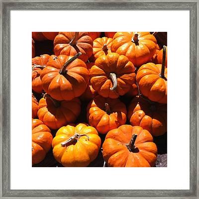 Mini Fall Pumpkins Framed Print by Denyse Duhaime