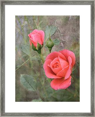 Miniature Roses Framed Print by Angie Vogel
