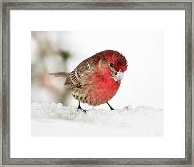 Mining For Food Framed Print by Betty LaRue