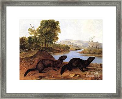 Minks Framed Print by Audubon