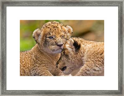 Minor Collision Framed Print by Ashley Vincent