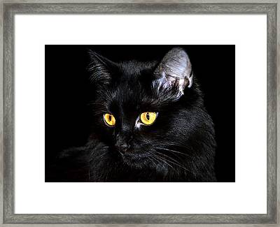 Miss Anastasia Framed Print by Camille Lopez