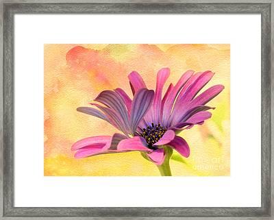 Miss Daisy Framed Print by Sabrina L Ryan