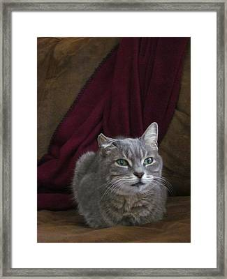 Miss Lucille Framed Print by Guy Ricketts