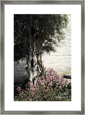 Mission San Jose Tree Dedicated To The Ohlones Framed Print by Ellen Cotton