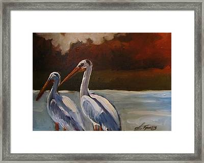Missouri River Pelicans Framed Print by Suzanne Tynes
