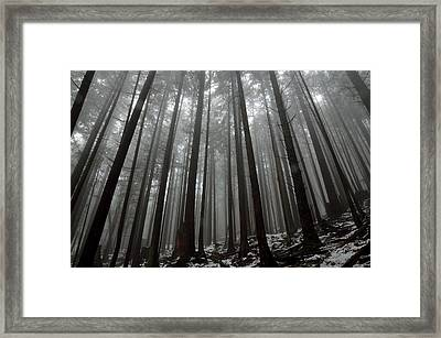 Mist In The Woods Framed Print by Kathy King