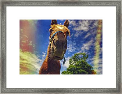 Mister Ed Framed Print by Kenny Noddin