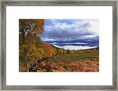 Misty Day In The Cairngorms II Framed Print by Louise Heusinkveld