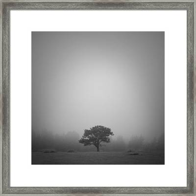Misty Morning Framed Print by Patrick Downey