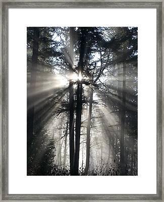 Misty Morning Sunrise Framed Print by Crista Forest
