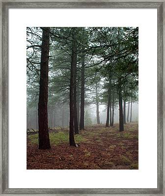 Misty Pines In Colorado Framed Print by Julie Magers Soulen