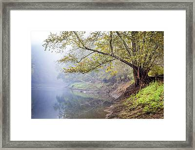 Misty Trees Framed Print by Debra and Dave Vanderlaan