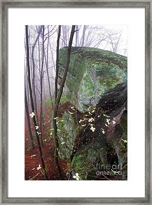 Misty Woods Framed Print by Thomas R Fletcher