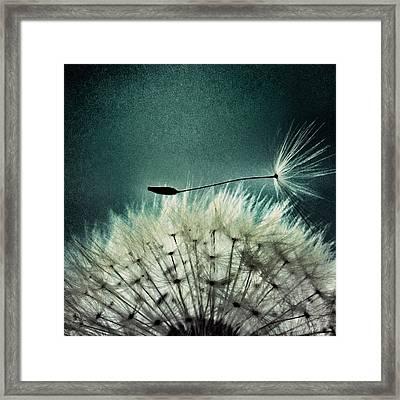 Misunderstood  Framed Print by Marianna Mills