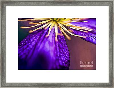 Mitey Clematis-2 Framed Print by Nancy Marie Ricketts