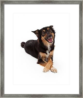 Mixed Breed Dog Laying Legs Crossed Framed Print by Susan  Schmitz