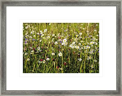 Mixed Flowers Framed Print by Aged Pixel