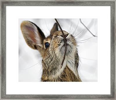 Mmm.. I Like Twiggy... Framed Print by Nina Stavlund