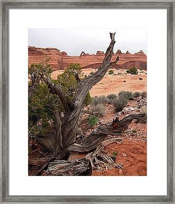 Moab Driftwood Framed Print by Kimberlee Fiedler