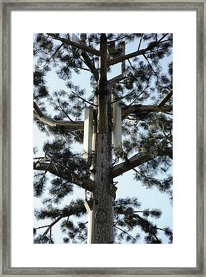 Mobile Phone Mast Disguised As Tree Framed Print by Public Health England