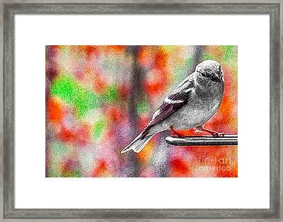 Mocking The Bird Framed Print by Lee Wilson