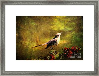 Mockingbird Have You Heard... Framed Print by Lianne Schneider