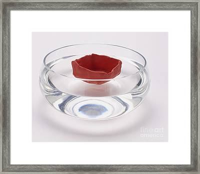 Modelling Clay Floating In Water Framed Print by Dorling Kindersley