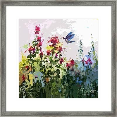 Modern Hummingbird And Bee Balm  Framed Print by Ginette Callaway