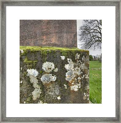 Moldy Above And Below Framed Print by Jean Noren
