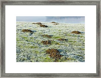 Molehills In A Frosty Field Framed Print by Ashley Cooper