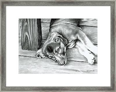 Molly Framed Print by Tom Hedderich