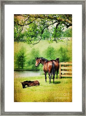 Mom And Foal Framed Print by Darren Fisher