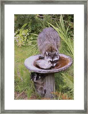 Mommy Can You See Me? Framed Print by Kym Backland