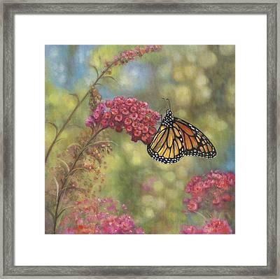Monarch Butterfly Framed Print by John Zaccheo