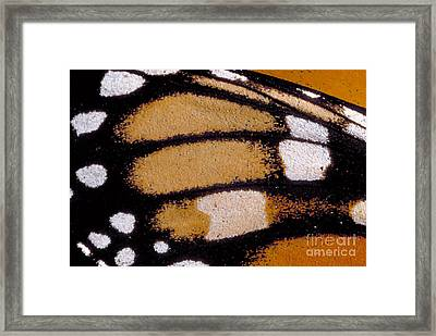 Monarch Butterfly Wing Framed Print by Gregory G. Dimijian