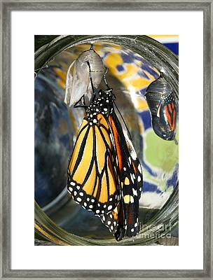 Monarch In A Jar Framed Print by Steve Augustin