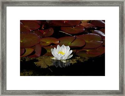 Monet Memories Framed Print by Marilyn Wilson