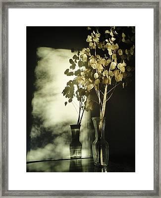 Money Plants Really Do Cast Shadows Framed Print by Guy Ricketts