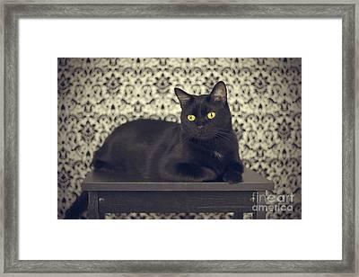 Mongo The Robust Cat Framed Print by Jennifer Ramirez