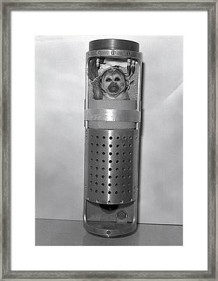 Monkey Baker In Bio-pack Framed Print by Underwood Archives