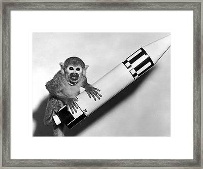 Monkey Baker With Jupiter Framed Print by Underwood Archives