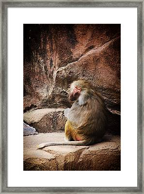 Monkey Business Framed Print by Karol Livote