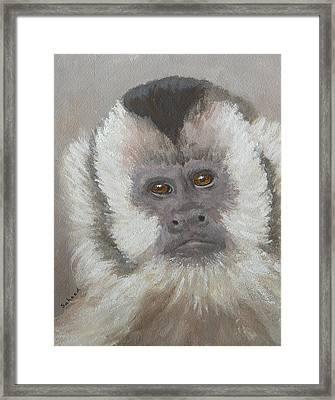 Monkey Gaze Framed Print by Margaret Saheed