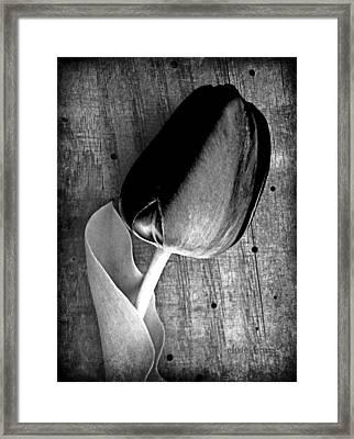 Monochromatic Tulip Framed Print by Chris Berry
