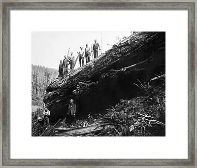 Monster Sequoia Conquered C. 1890 Framed Print by Daniel Hagerman