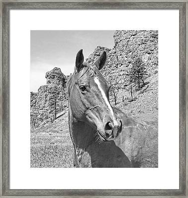 Montana Horse Portrait In Black And White Framed Print by Jennie Marie Schell
