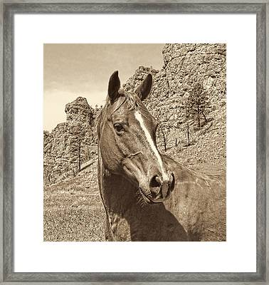 Montana Horse Portrait In Sepia Framed Print by Jennie Marie Schell