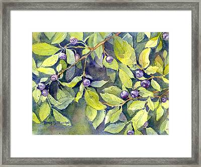 Montana Huckleberries Framed Print by Terry Moss